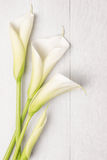 Elegant spring flower, calla lily Stock Photography