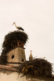 Elegant stork with its nest Royalty Free Stock Photo