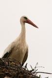 Elegant stork with its nest Stock Photos