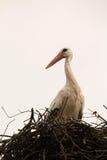 Elegant stork with its nest Stock Images