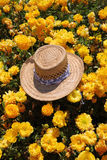 The elegant straw hat  in the field Royalty Free Stock Photography