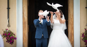 Elegant stylish brunette bride and groom holding pigeons on the Stock Images