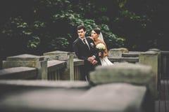 Elegant stylish young couple Royalty Free Stock Image