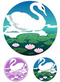 Elegant swan in a lily pond Royalty Free Stock Images