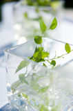 Elegant Table Decoration with Leaves in Glass Stock Photography