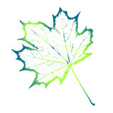 Elegant template green leaf Royalty Free Stock Images