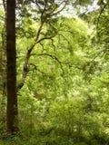 Elegant Tree. Stock Image
