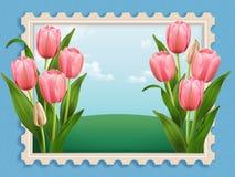 Elegant Tulip bed Stock Image