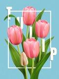 Elegant Tulip poster Royalty Free Stock Photos