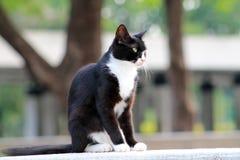 Elegant tuxedo cat sitting Royalty Free Stock Images