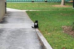 Elegant tuxedo cat Stock Photo