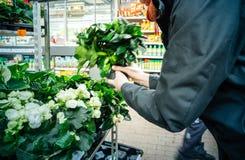 Elegant tysk kvinna som köper olika blommor royaltyfri fotografi