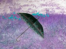 Elegant umbrella with flowers texture in a field of flowers. stock photos