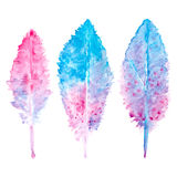 Elegant vector background with watercolor drawing feathers. Royalty Free Stock Photo