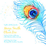 Elegant vector background with watercolor peacock feather Stock Photos