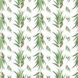 Elegant vector seamless pattern with eucalyptus Stock Image