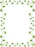 Elegant vine border Royalty Free Stock Photos