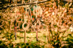Elegant vintage keys as garden decoration and interior design. Rustic style. The original design. Old keys on the background of the autumn garden Stock Image