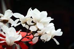Elegant vit magnolia arkivbilder