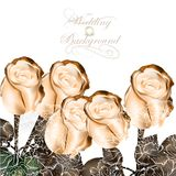 Elegant wedding background with beige roses Royalty Free Stock Photography