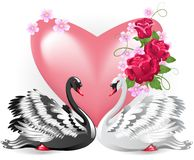 Elegant white and black swans Royalty Free Stock Image