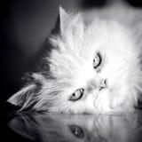 elegant white för katt Arkivbilder