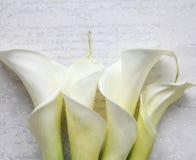 Four calla lilies on textured script Stock Photos