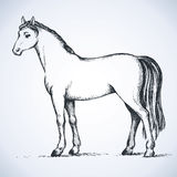 Elegant white horse. Vector drawing Royalty Free Stock Photos
