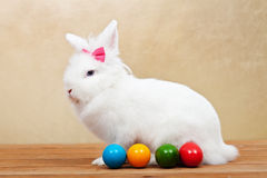 Elegant white rabbit with easter eggs Stock Photo