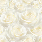 Elegant white seamless pattern luxurious rose Stock Photography