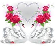Elegant white swans Stock Images