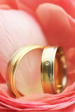 Wedding rings in pink flower. Elegant white and yellow gold wedding rings close up Stock Images