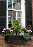 Elegant Window Box Stock Photo