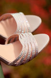 Elegant woman shoes Stock Photography