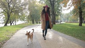 Elegant woman walking with dog in autumn park stock video footage