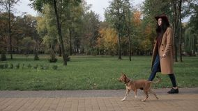 Woman taking a stroll with dog in autumn park stock video footage