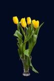 Eleganta gula tulpan på en mörk bakgrund Arkivbild