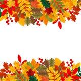 Eleganta och härliga höstsidor och beståndsdelar Ljusa bilder för tacksägelsedag royaltyfri illustrationer