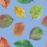 Eleganta sidor f?r design f?rgrika leaves f?r h?st S?ml?s vattenf?rgmodell av sidor stock illustrationer