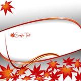 Elegante achtergrond met bladeren. Stock Afbeeldingen