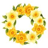 Elegante achtergrond met gele gele narcisnarcissen De lentebloem met stam en bladeren Realistisch patroon Royalty-vrije Stock Fotografie