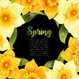 Elegante achtergrond met gele gele narcisnarcissen De lentebloem met stam en bladeren Realistisch patroon Royalty-vrije Stock Foto