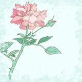 Elegante achtergrond met roze bloem Stock Foto