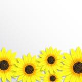 Elegante achtergrond met zonnebloemen Royalty-vrije Stock Afbeeldingen