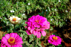 Elegante bloemen Royalty-vrije Stock Fotografie