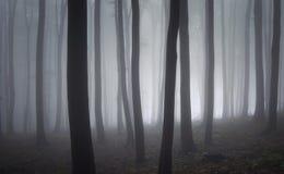 Elegante bomen in een bos met mist royalty-vrije stock foto
