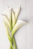 Elegante de lentebloem, calla lelie Royalty-vrije Stock Afbeeldingen