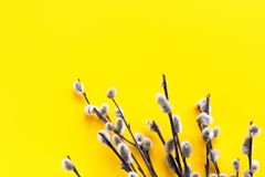 Elegante flaumige Pussyweidenniederlassungen auf hellem gelbem Hintergrund Schöner Minimalist Ostern-Feiertagshintergrund mit Kop lizenzfreie stockbilder