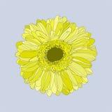 Elegante gele grafische gerbera Royalty-vrije Stock Fotografie