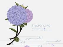 Elegante hydrangea hortensia Stock Illustratie